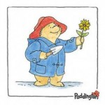 barry-macey-paddington-bear-101418